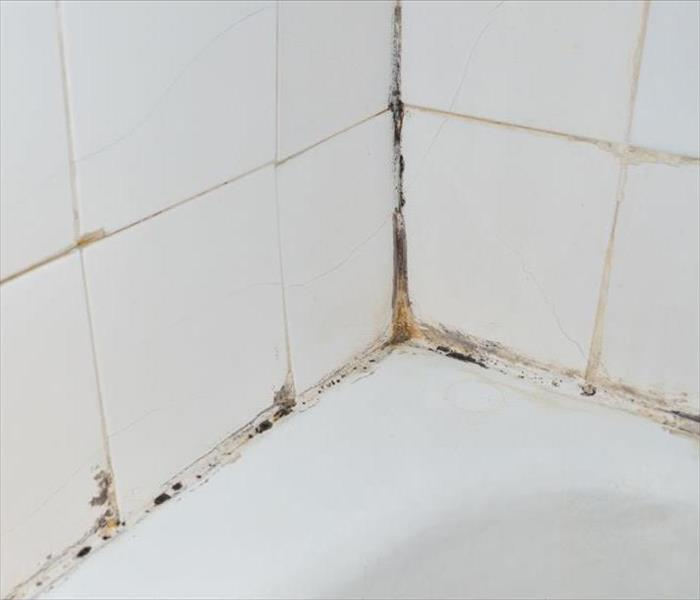 Mold Remediation for Calabasas
