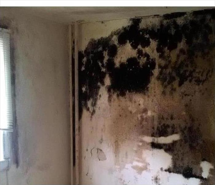 Mold Growth on Wall in Agoura