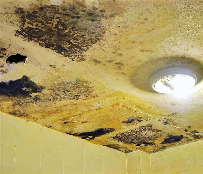 Mold Remediation Professional Cleanup Options during Mold Damage Remediation in Westlake Village
