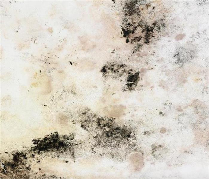 Mold Remediation Learn the Differences Between Mold Damage and Mildew on Your Agoura Hills Property
