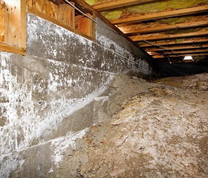 Mold Remediation How to Control Mold Damage to Your Agoura Hills Property