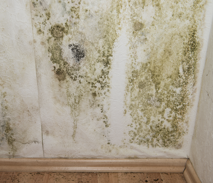 Mold Remediation Mold Removal Can Improve Properties