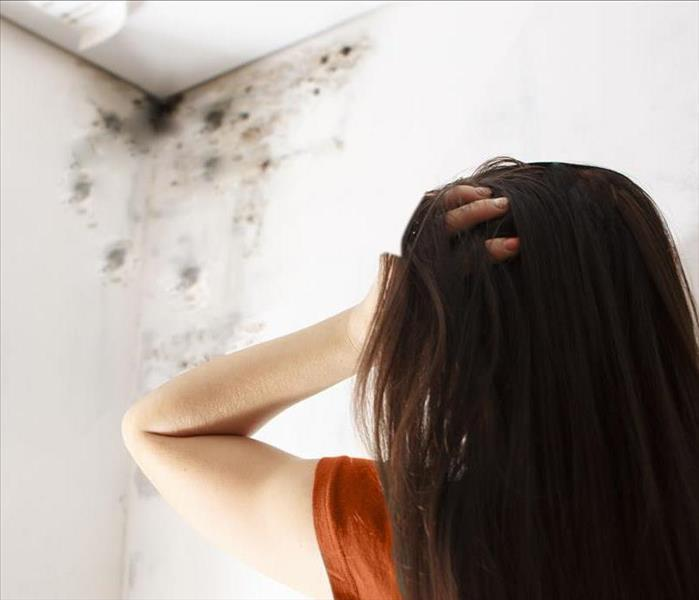 Mold Remediation Our Technicians Want To Catch Mold Before It Spreads In Your Agoura Home